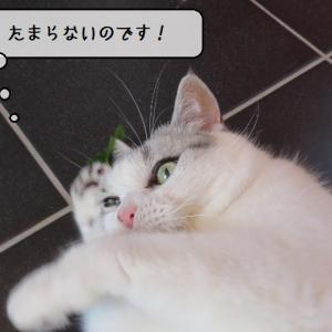 猫雑記 ~またたびの葉っぱ検証・ビビり猫様すずめ編~