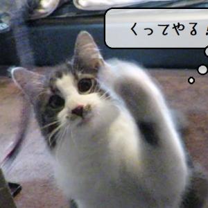 猫動画 ~「あおだいしょうかこのやろう」2020.06.03~