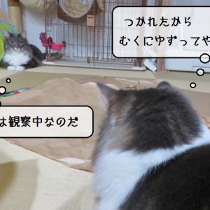 猫雑記 ~「キャッチミーイフユーキャン2」に破壊されないヒモを~
