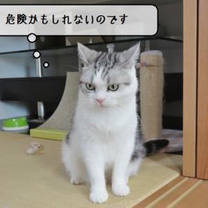 猫雑記 ~新しいひんやりジェルマットを拒否する猫様達~