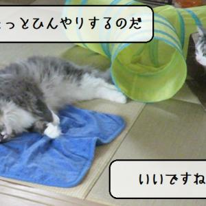 猫動画 ~「なんだか寝心地が良いのだ」2020.06.15~