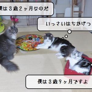 猫雑記 ~2021年7月の猫様体重測定~