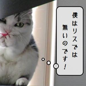 猫動画 ~「運ばずにはいられないのです!」2020.06.16~