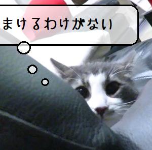 猫動画 ~「かくれんぼかこのやろう」2020.07.02~