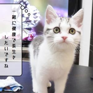 猫動画 ~「でっかい猫がいるのだ!」~
