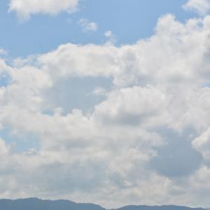 コヨシキリをアキアカネが飛ぶ平城京跡で