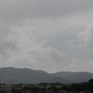 クマゼミが鳴く朝は梅雨明け