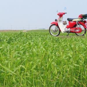 マウンテンバイク♪