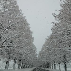 雨と雪続き・・・