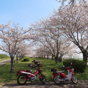 ダブルカブと桜♪
