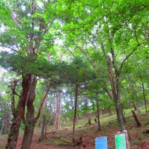 黒川鶏冠山 苔とタマゴダケ