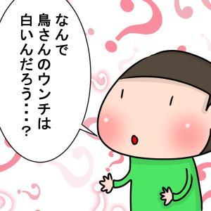 【育児マンガ】鳥のウンチはなぜ白い?