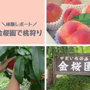金桜園で桃狩り!リーズナブルな箱買いシステム♪ロケ地だよ