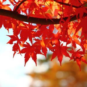 食欲の秋、そして美しい紅葉
