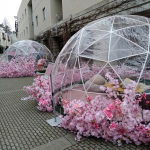 早春の八ヶ岳南麓の動物たち、そして久々のリゾナーレは桜色
