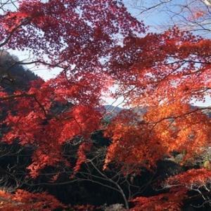 11/21カメラ故障、生瀬富士、かずまの紅葉を楽しみ下山