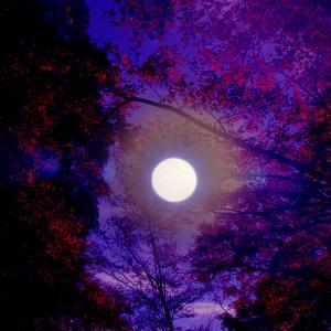 奉祝の満月