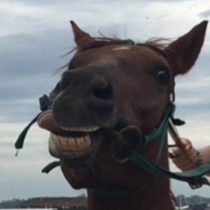 バリ島で乗馬体験。飛行機乗る前に馬乗るわ。