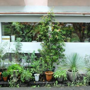 朝来市にある花屋「木まもり」でドライフラワーを購入したよ!