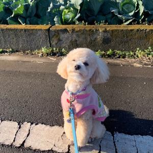 ハナのお散歩とフリマ初体験の1日