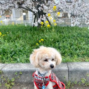 ひょうたん公園でお花見