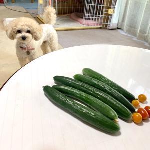 出来過ぎ〜!の家庭菜園