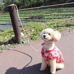 ハナと秋の飛騨高山〜金沢〜安曇野へ④