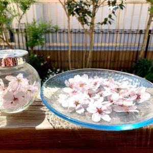 サクラのドライと庭の花