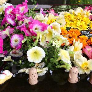 こちらも素敵!前玉神社のお洒落な花手水
