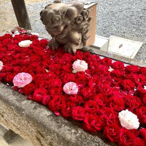境香取神社のお誕生日御朱印と花手水