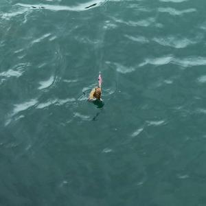 初釣りエギングガール