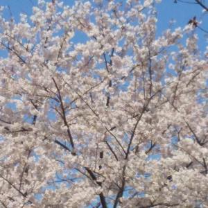 桜木みなとさんブリドリ!