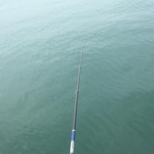 東埠頭周辺チカ釣り