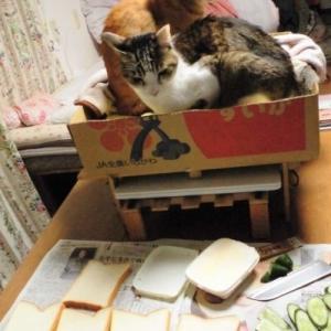 サンドイッチ。