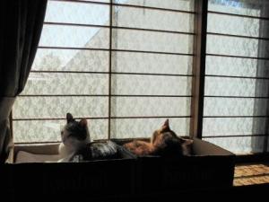 日向の窓辺。