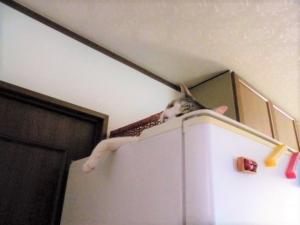 冷蔵庫の上。