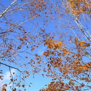 秋も深まり・・・寒い