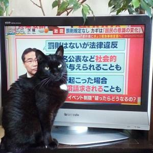 猫を飼うということ(8)
