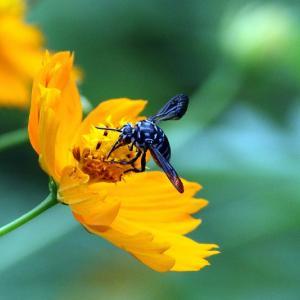 幸せを呼ぶ青い蜂 ブルー・ビー!≪番外編≫