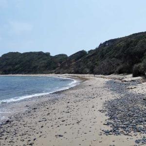 満潮時の千畳敷海岸を鳥見散歩!(チュウシャクシギ&キアシシギ)
