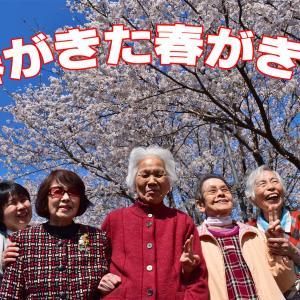 春が来た~桜咲く散歩道