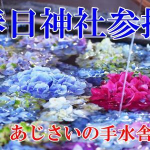 春日神社参拝~梅雨の季節のインスタ映え~