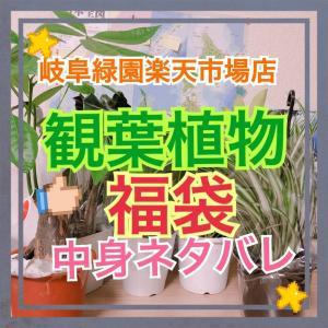 観葉植物福袋(岐阜緑園)購入!見たことない観葉植物入ってた!中身ネタバレ