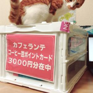 カフェランテHAPPYBOX【福袋】2021購入!今回もお得な中身