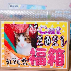 ペットマーケットあにまる 猫用福袋(福箱)2021到着!中身ネタバレ