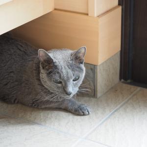 ぷりんは19歳になりました