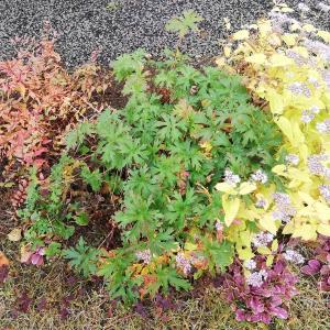 秋の庭の草木