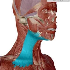 広0️⃣頚筋