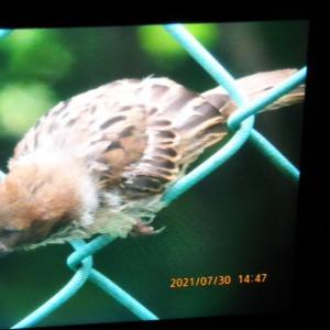 南側から食べてく鳥たち