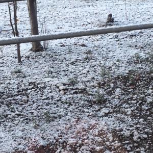 初雪が降ったよ!!